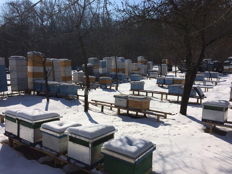 Зимовка пчел в одном корпусе на 230.