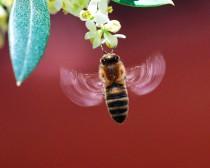Интересное из жизни пчёл и пчеловодов